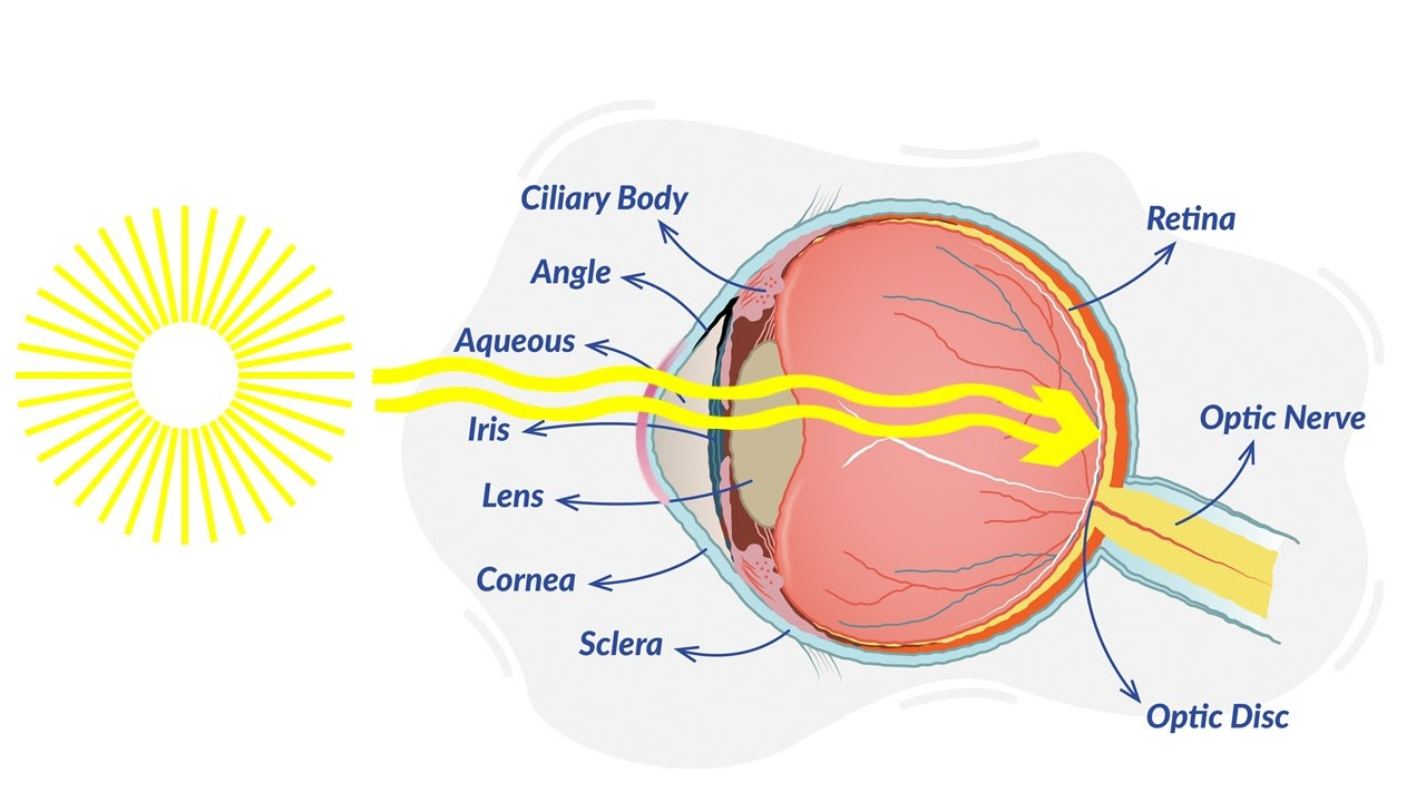 a diagram of an eye with an example of the sun's rays penetrating the eyeball